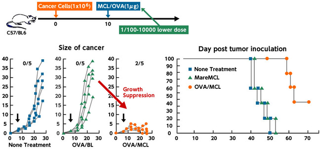 Anti-Cancer effect of MCL vaccine